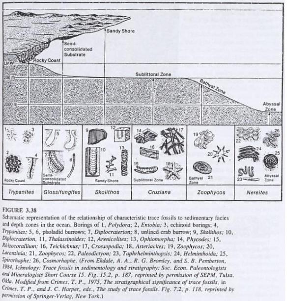 Gambar 5. Hubungan trace fosil terhadap fasies sedimen dan zona kedalaman di lautan.